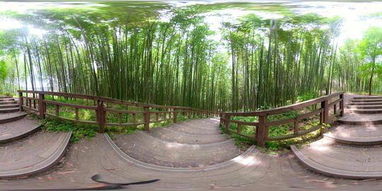 360 VR Bamboo Forest 5K Video Collection 2
