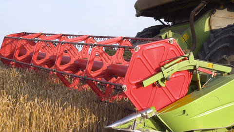 Combine harvester close up. Combine harvester harvesting wheat at sunset Live Action
