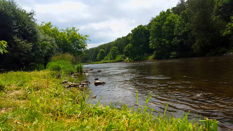 Beautiful Flowing River Surrounded By Forest Trees in Summer. Viewpoint From Tree lined River Shore Footage