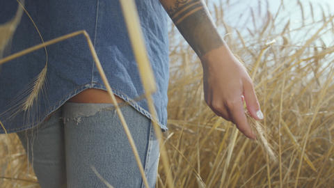 Hand of a carefree woman in jeans clothes touching yellow wheat ears standing on Footage