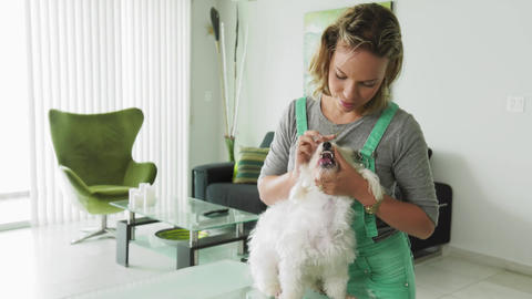 1-Dog Owner Inspecting Mouth Dental Hygiene Of Pet Teeth Footage