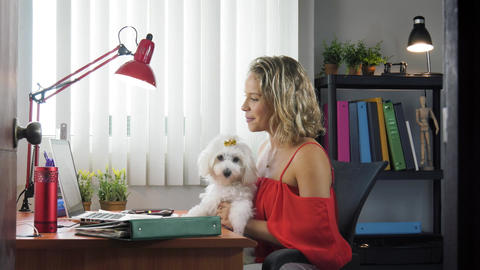 3-Office Woman Holding Dog During Skype Conference Call Footage