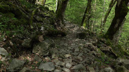 Walk at rocky trail, greenwood at mountain slope, rough stones on way Footage