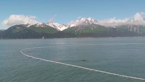 Seal lions and commercial fishermen competing for salmon Live Action