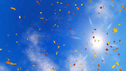 Looking up at sunny sky with falling autumn leaves Animation