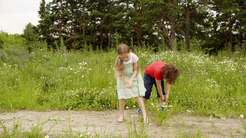 Children walk and play on flower meadow tear flowers at summer outdoor activity Footage