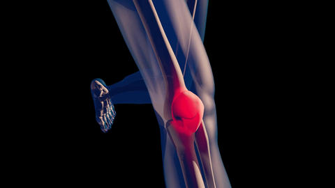 4K Knee Pain in Human Body Transparent Design with Matte 2 Animation