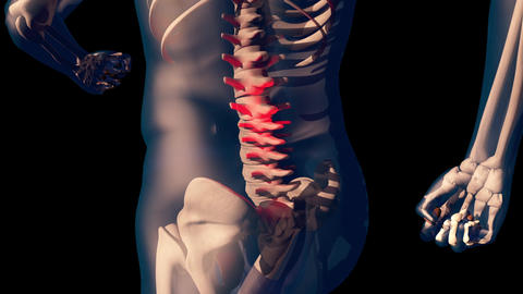 4K Lower Spine Pain in Human Body Transparent Design with Matte 2 Animation