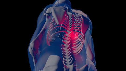 4K Spine Pain in Human Body Transparent Design with Matte 2 Animation