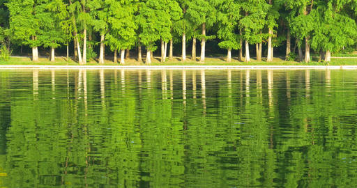Green Tree Forest Reflection Abstract In Water Lake Footage
