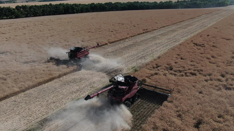 Two big combine harvesters are working on the fields of colza, harvest season Live Action