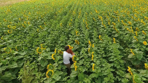 Aerial view of man and woman walking on yellow sunflower field. Freedom concept Footage