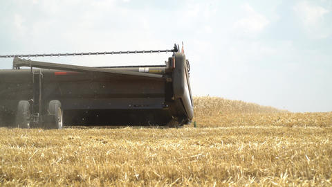 Harvesting work on the wheat field, combine harvester is working, 4k Live Action