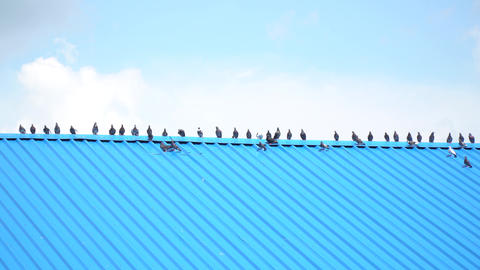 Long blue roof with many doves sitting on it, blue sky on the background, 4k Live Action