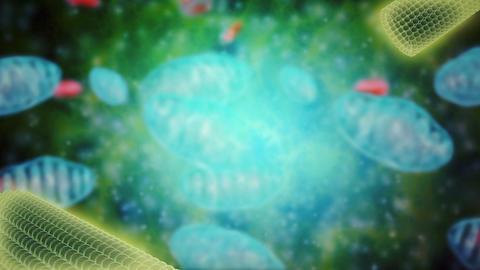 Centrioles animation Animation