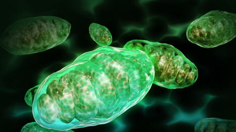 Several mitochondria moving inside their environment Animation