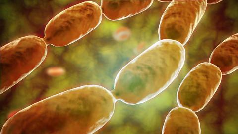 Bacterial pneumonia animation 애니메이션