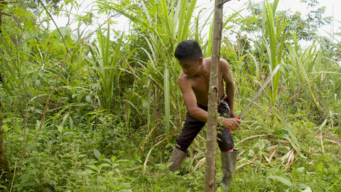 Indigenous Man Cutting The Weeds In An Amazon Rainforest Footage
