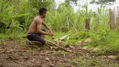 Indigenous Man Cutting Sugar Cane Sticks In The Amazon Rainforest Live Action