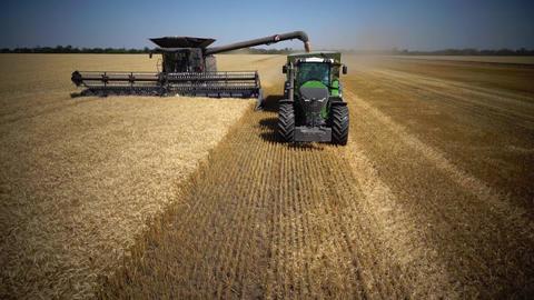 Harvester Fendt Ideal and Fendt 1050 harvests wheat Live Action