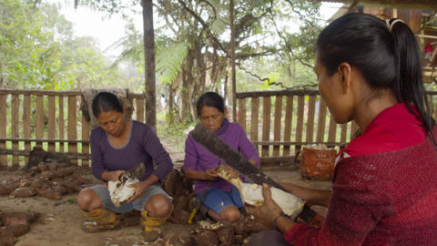 Group Of Indigenous Women Peeling Yucca In The Amazon Rainforest In Ecuador Live Action