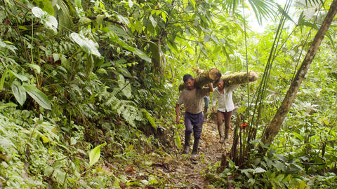 Indigenous Carrying Wooden Logs On Their Shoulders In Ecuador Live Action