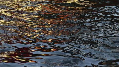 Abstract nature. Golden sunlight water reflection of house. Shark catfish swim Footage