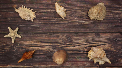 Shells and Star in the middle on wooden background - Stop motion Animation