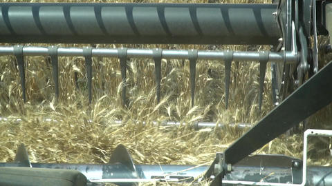 Wheat harvesting process, combine harvester is working the fields, close up Live Action