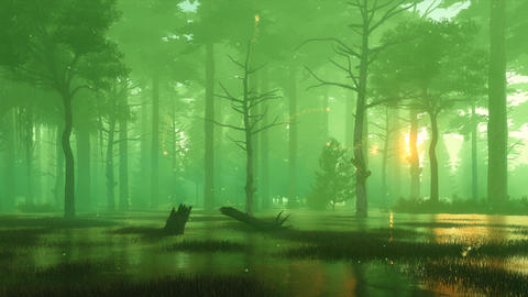 Magic firefly lights on foggy mystic forest swamp Cinemagraph Animation