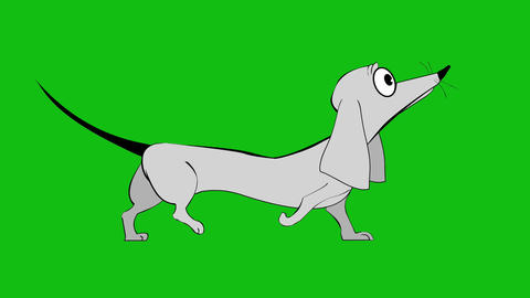 Animation dog gait. Dachshund breed dog Animation Live Action