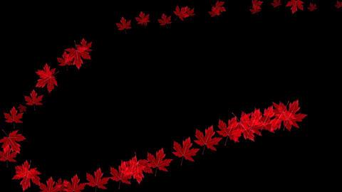 Autumn leaves on black background Animation