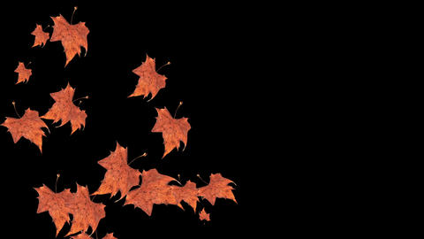 Autumn falling leaves on black background with copy space Animation