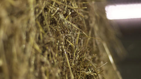 Harvested fresh hay lies at farm side by side Live Action