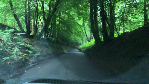 JSP-0848 View of country lanes covered in trees through windscreen of fast car Live Action
