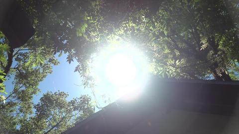Summer sunbeams Live Action
