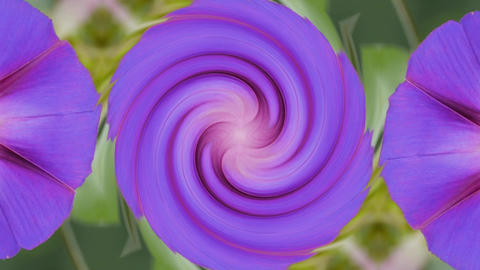 morning glory deformation rotation swirl pattern in lush leaves.agriculture farm Animation