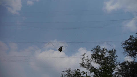 Bird trapped in net,struggling to die in blue sky like fail loser.Shaking leaves Footage