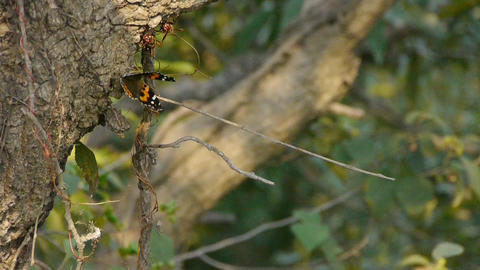 Butterfly inciting wings on tree trunk in woods Stock Video Footage