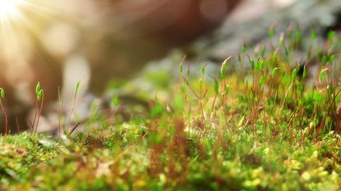 Moss In Spring Forest. Shot Slider Footage