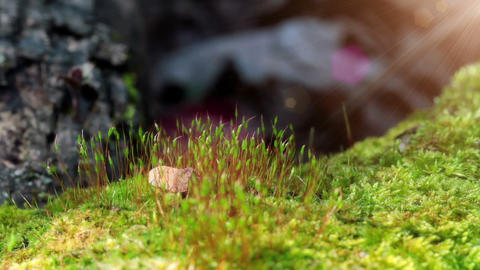 Moss In Spring Forest. Shot Slider Footage