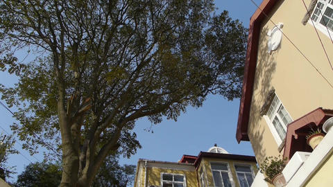 Tree with old house,blue sky & lush canopy at Europe German architecture Footage