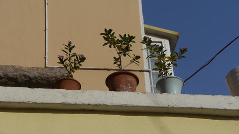 Flower pots on balcony & blue sky Footage