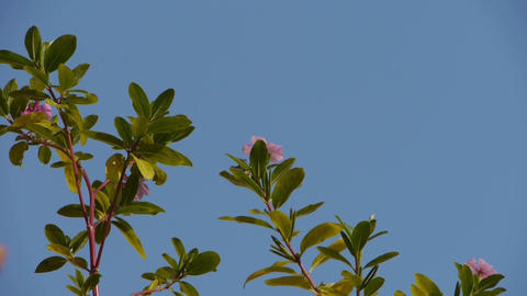 Flower & branches shaking in wind Stock Video Footage