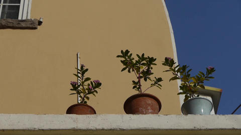Flower pots on balcony shaking in wind & blue... Stock Video Footage