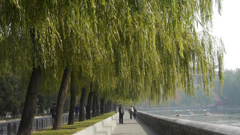 willow relying on river,yacht on lake,Road of Forbidden City in Beijing Footage