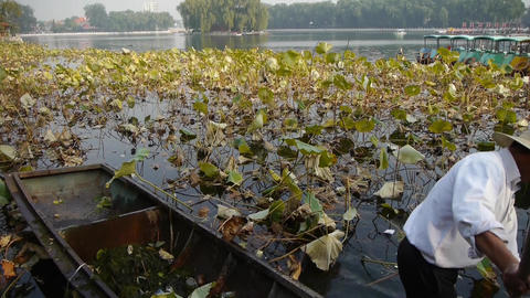 Vast lotus pool,Fisherman on wooden boat clean lake in... Stock Video Footage