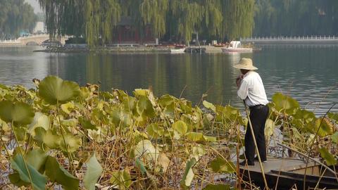 Vast lotus pool,Fisherman on boat clean lake in beijing Stock Video Footage