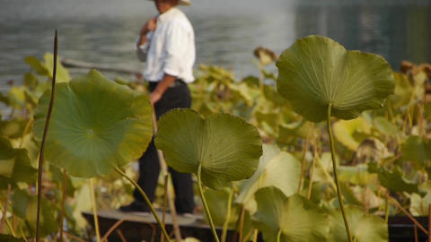 Vast lotus pool,Fisherman on boat in beijing Stock Video Footage