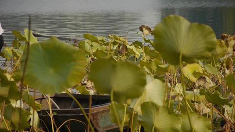 Vast lotus pool,Fisherman on boat in beijing Stock Video Footage